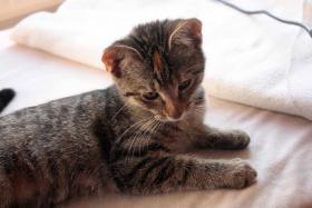 Foto 4 Hauskatzen zm Verlieben, weiblich, 5 Monate, abzugeben