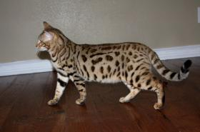 Foto 4 Hauskatzen - Kitty und Molly