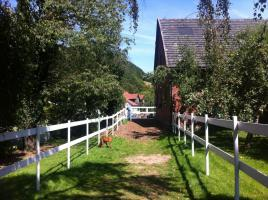 Foto 6 Helle gitterfreie Pferdeboxen in netter Stallgemeinschaft