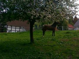 Foto 7 Helle gitterfreie Pferdeboxen in netter Stallgemeinschaft