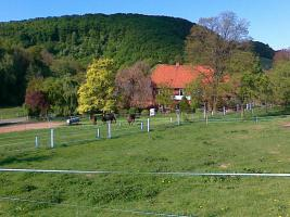 Foto 8 Helle gitterfreie Pferdeboxen in netter Stallgemeinschaft
