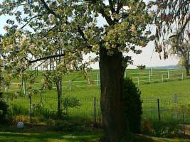 Foto 10 Helle gitterfreie Pferdeboxen in netter Stallgemeinschaft