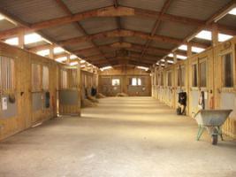 Foto 3 Helle, luftige Boxen mit Paddock oder Fenster, Reithalle frei