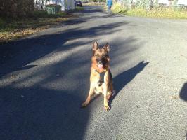 Hera ist ein ausgebildeter Blindenführhund in Rente