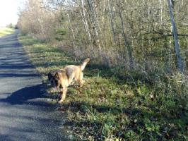 Foto 3 Hera ist ein ausgebildeter Blindenführhund in Rente