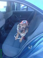 Foto 4 Hera ist ein ausgebildeter Blindenführhund in Rente