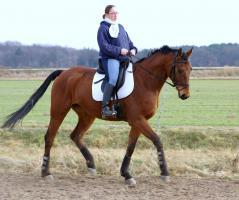 Foto 6 Hessisches Warmblut sucht neuen Turnier oder Familien Reiter