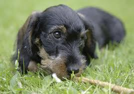 Foto 2 Hilfe für Hunde mit Probleme des Alters