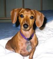 Foto 3 Hilfe für Hunde mit Probleme des Alters