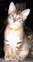 Hilfe für Katzen gesucht in Form von Patenschaften Futterspende