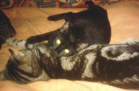 Foto 3 Hilfe für Katzen gesucht in Form von Patenschaften Futterspende