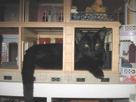 Foto 4 Hilfe für Katzen gesucht in Form von Patenschaften Futterspende