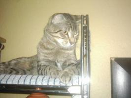 Foto 5 Hilfe für Katzen gesucht in Form von Patenschaften Futterspende