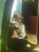 Foto 8 Hilfe für Katzen gesucht in Form von Patenschaften Futterspende