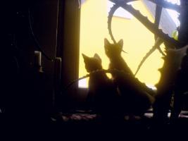 Foto 9 Hilfe für Katzen gesucht in Form von Patenschaften Futterspende