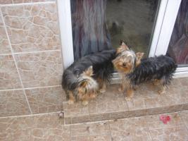 Foto 3 Hilfe Tierischer Notfall!!!