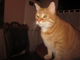 Hilfe, kastriert Katze und Kater suchen dringend ein neues zu Hause