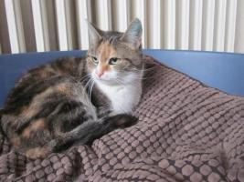 Foto 2 Hilfe, kastriert Katze und Kater suchen dringend ein neues zu Hause