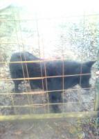 Foto 2 Hilfe - Der langhaarige Giacomo vereinsamt, dabei ist er so anhänglich und folgsam