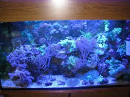 Hobbyaufgabe Meerwasseraquarium