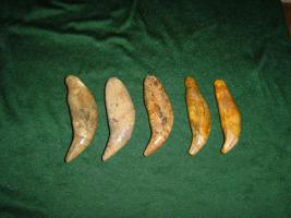 Höhlenbär Reißzahn, Höhlenbär Zahn, Cave Bear Tooth, Fossilien, Fossils