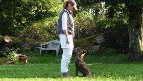 Foto 4 Hollandse Herder Hündin, 5 Monate, Enkelin v. Fleisch(VPG, IPO)