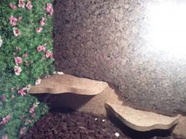 Foto 2 Holzterrarium sehr günstig abzugeben