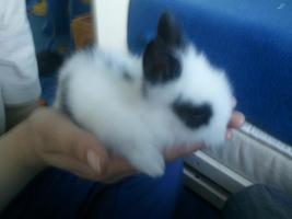Hübsche Kaninchenbabys abzugeben