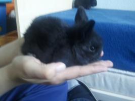 Foto 3 Hübsche Kaninchenbabys abzugeben