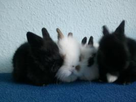Foto 5 Hübsche Kaninchenbabys abzugeben