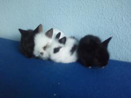 Foto 6 Hübsche Kaninchenbabys abzugeben