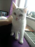 Foto 3 Hübsche, 8 Monate alte Maine Coon Mix Katze sucht neues, liebevolles Zuhause!