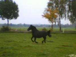 Foto 2 Hübscher, intelligenter Pony Wallach