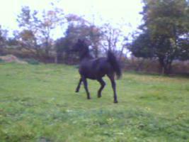 Foto 4 Hübscher, intelligenter Pony Wallach