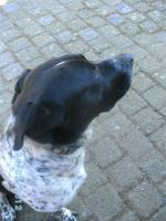 Foto 4 Hund