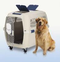 Foto 3 Hunde-Flugtransportboxen-Verkauf-Verleih-Vermietung:Nord-Süd-Handel