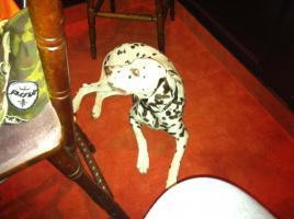 Foto 2 Hunde Lady