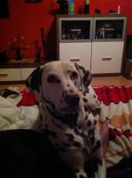 Foto 3 Hunde Lady