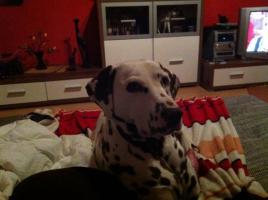 Foto 4 Hunde Lady