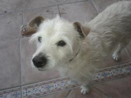 Hunde Opi Bobby sucht ein neues Zuhause