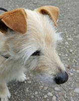 Foto 2 Hunde Opi Bobby sucht ein neues Zuhause