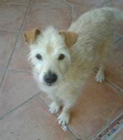 Foto 4 Hunde Opi Bobby sucht ein neues Zuhause