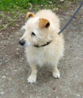 Foto 5 Hunde Opi Bobby sucht ein neues Zuhause