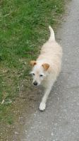 Foto 6 Hunde Opi Bobby sucht ein neues Zuhause