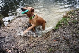 Foto 3 Hunde Outdoor - Sport u Agillity Cross Woorkshop Ratingen Samstags Sonntag