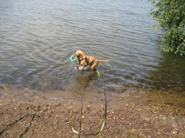 Foto 6 Hunde Outdoor - Sport u Agillity Cross Woorkshop Ratingen Samstags Sonntag