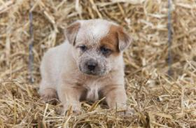 Foto 5 Hunde Welpen