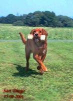 Hunde-Zubehör und hübscher Rüde