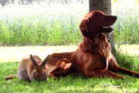 Foto 4 Hunde-Zubehör und hübscher Rüde