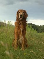 Foto 5 Hunde-Zubehör und hübscher Rüde